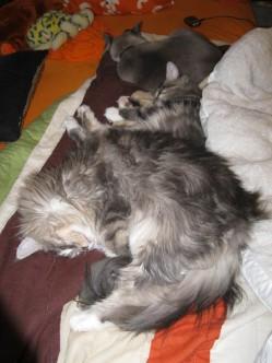 threecats012
